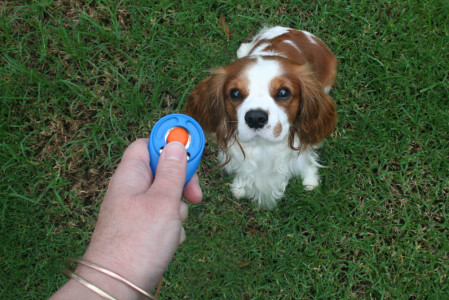 clicker-training-at-dogPACER
