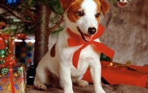 Sweet-dog-under-Xmas-Tree-800-969604