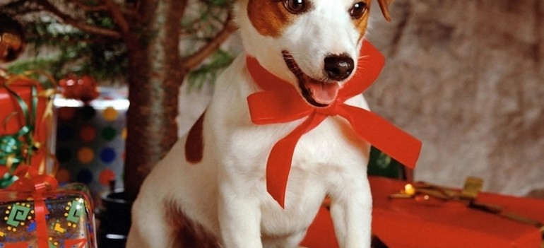 Sweet-dog-under-Xmas-Tree-800-969604